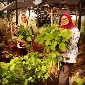 Wisata petik sayur